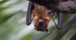 El mensaje del murciélago